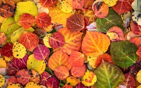 Картинка осень, макро, краски, листва