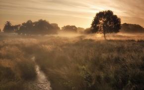 Обои поле, туман, утро
