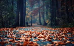 Картинка осень, асфальт, листья, парк, листва, фокус, утро, боке