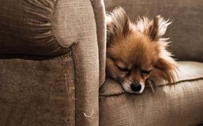 Обои сон, кресло, пёс