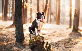 Обои собака, лес, друг