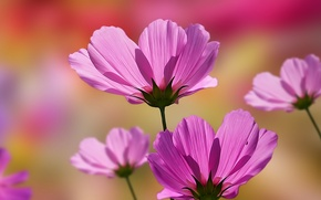 Обои цветок, весна, природа