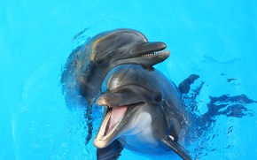 Картинка вода, пара, дельфины