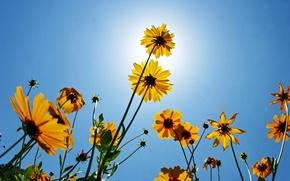 Обои цветы, природа, красота