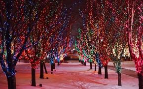 Картинка гирлянда, разноцветные, снег, праздники, природа, зима, дорога, деревья, огни, огоньки, ночь, аллея, ветки, следы