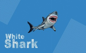 Обои white, blue, shark, pop art