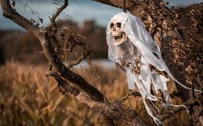 Картинка дерево, череп, Halloween, Хэллоуин
