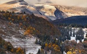 Картинка лес, облака, снег, горы, ёлки