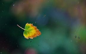 Обои стекло, вода, капли, дождь, окно, water, window, leaf, single, Nikon D90, one rainy, осенний лист