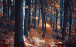 Картинка лес, свет, деревья, природа