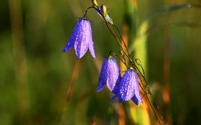 Картинка капли, цветы, природа