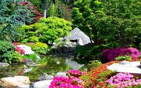 Картинка деревья, цветы, пруд, камни, Франция, сад, кусты, Albert-Kahn Japanese gardens