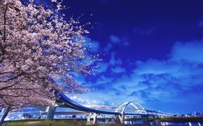 Обои дерево, фонари, мост, река, япония