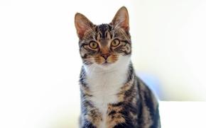 Картинка кошка, кот, смотрит, разноцветный