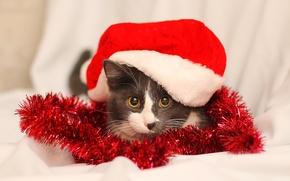 Картинка глаза, кот, кошки, красный, Новый год, 2015, murlen, мурлен