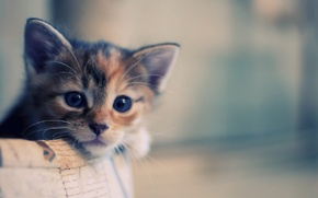 Обои кошка, макро, котенок, корзина, кот