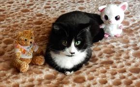 Картинка животные, кот, взгляд, widescreen, обои, игрушки, wallpaper, широкоформатные, background, обои на рабочий стол, полноэкранные, HD …