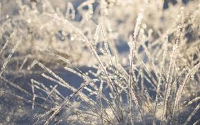 Картинка зима, трава, снег, природа, красота, Morgendorffer