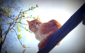 Картинка кот, усы, солнце, весна, утро, животные природа