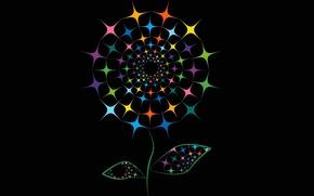 Обои цветок, краски, линии, фон
