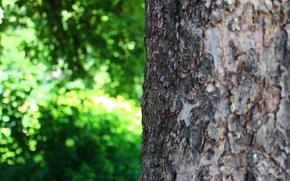 Обои зелень, лето, макро, природа, дерево, кора