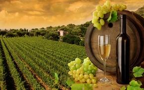 Обои бутылка, бочка, бокал, вино, листья, белое, виноградники, виноград