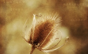 Картинка цветок, стиль, фон