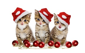 Картинка christmas, magic, balls, hat, kitten, eyes, cat, beautiful, pretty, beauty, kitty, merry christmas, sweet, cats, ...