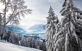 Картинка зима, лес, горы, ели, долина