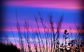Картинка небо, трава, облака, растение, силуэт, зарево