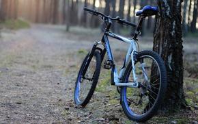 Картинка лес, велосипед, дерево, утро, дорожка