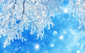 Картинка зима, макро, дерево, веточки. снег