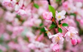 Картинка цветы, макро, весна, цветение