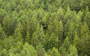 Картинка лес, деревья, много
