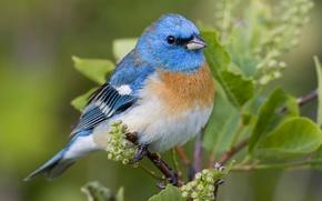 Картинка природа, лист, птица, ветка