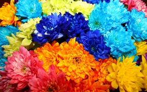 Картинка цветы, оранжевый, синий, розовый, голубой, яркие, букет, красивые, blue, pink