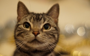 Картинка кошка, глаза, усы, взгляд, фон