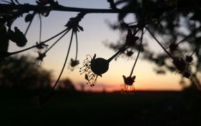 Картинка макро, закат, природа, дерево