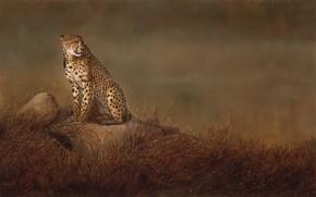 Картинка кошка, трава, камни, фон, картина, арт, гепард, саванна, дикая, Linda Schroeter