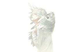 Картинка белый, птица, парень, art