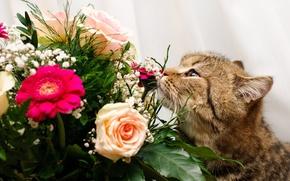 Картинка цветы, букет, котэ
