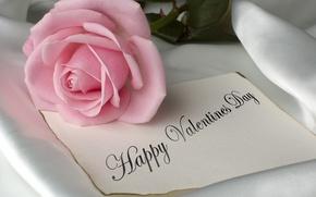 Картинка цветы, розовый, романтика, роза, rose, pink, flowers, pretty, romantic, День Святого Валентина, romance, valentines day, …