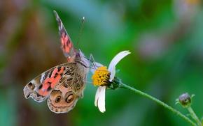Картинка цветок, бабочка, крылья, мотылек