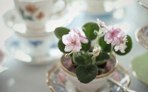 Картинка цветы, чашки, посуда, сервиз, фиалки