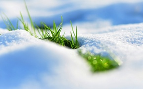Картинка трава, снег, весна