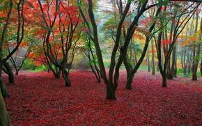 Обои листва, осень, деревья
