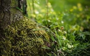 Картинка трава, дерево, росток, мох, размытость, кора