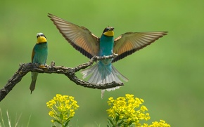 Картинка цветы, птицы, крылья, ветка, щурки, пчелоеды