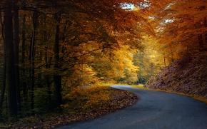 Картинка оранжевые, природа, асфальт, деревья, дорога, листья, желтые, осень, лес