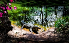 Картинка парк, крокодил, Вьетнам
